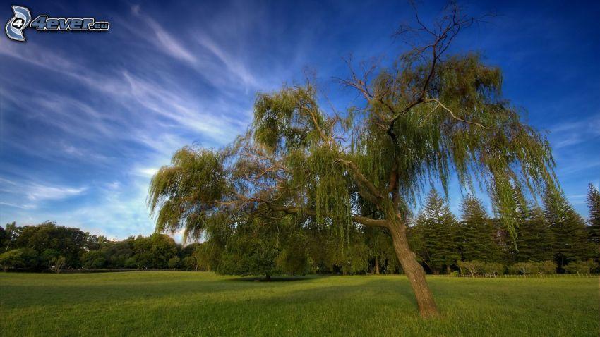 arbre solitaire, arbres, prairie