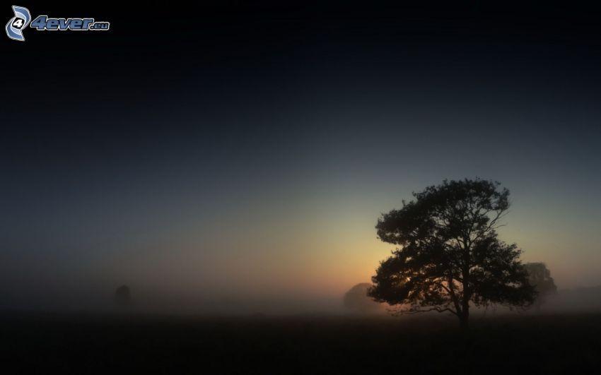 arbre solitaire, brouillard