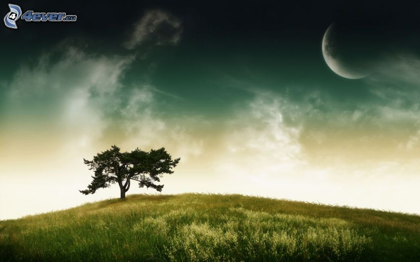arbre solitaire, lune, prairie