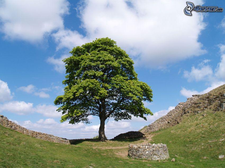 arbre solitaire, mur en pierre, puits