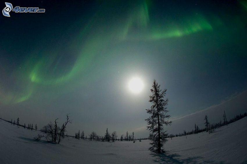 arbre solitaire, paysage enneigé, aurore polaire, lune