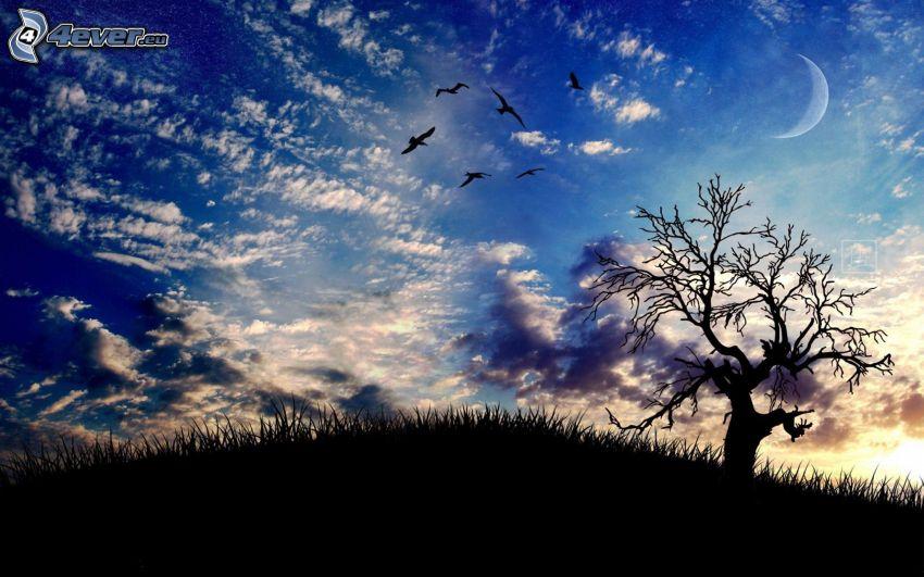 arbre solitaire, silhouette de l'arbre, ciel, nuages, lune