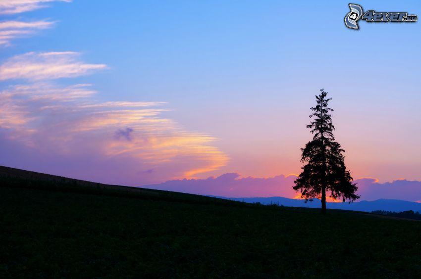 arbre solitaire, silhouette de l'arbre, ciel du soir