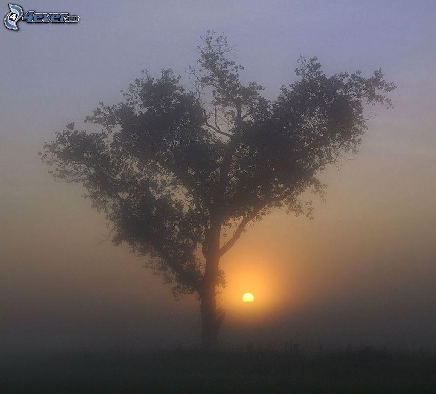 arbre solitaire, silhouette de l'arbre, lever du soleil, brouillard