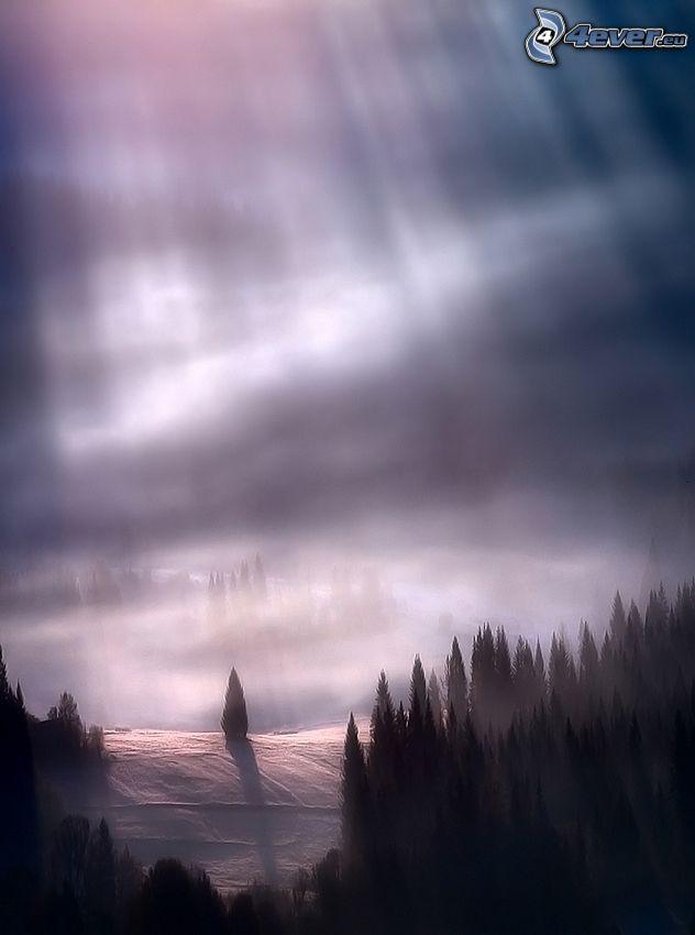 arbres conifères, neige, rayons du soleil