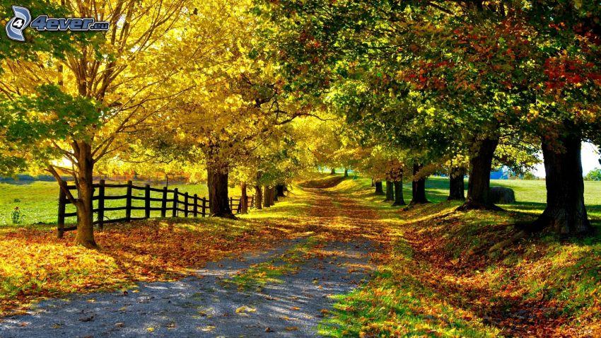 arbres d'automne, route, allée des arbres, clôture