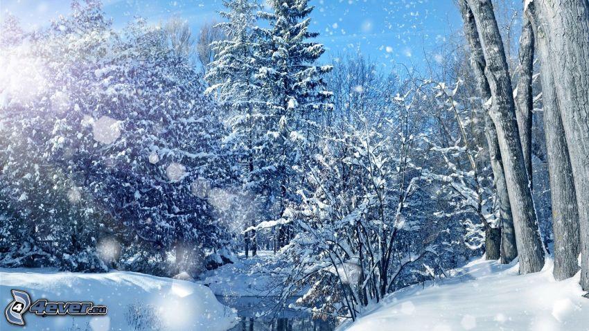 arbres enneigés, forêt enneigée, rivière, chute de neige