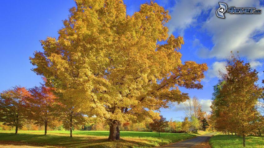 arbres jaunes, parc, route