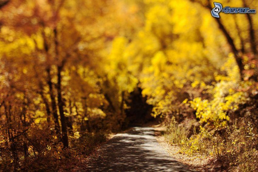 arbres jaunes, sentier à travers la forêt