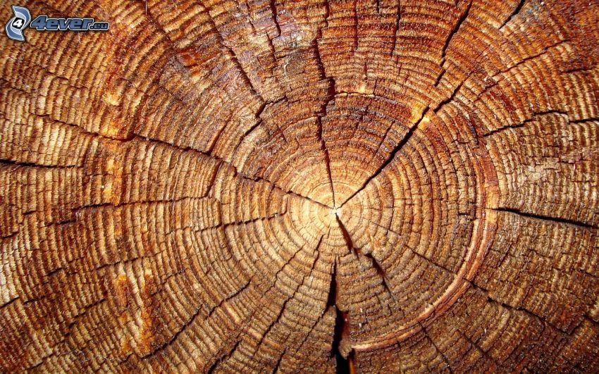 bois, anneaux, fissures