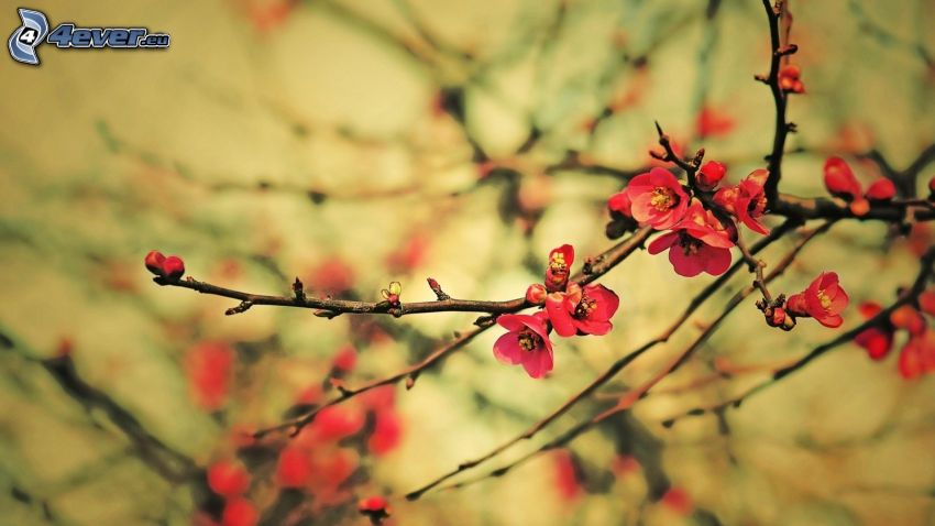 brindille, fleurs rouges