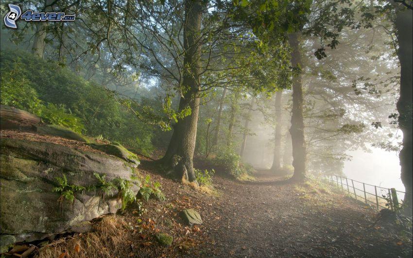 brouillard dans la forêt, chemin forestier