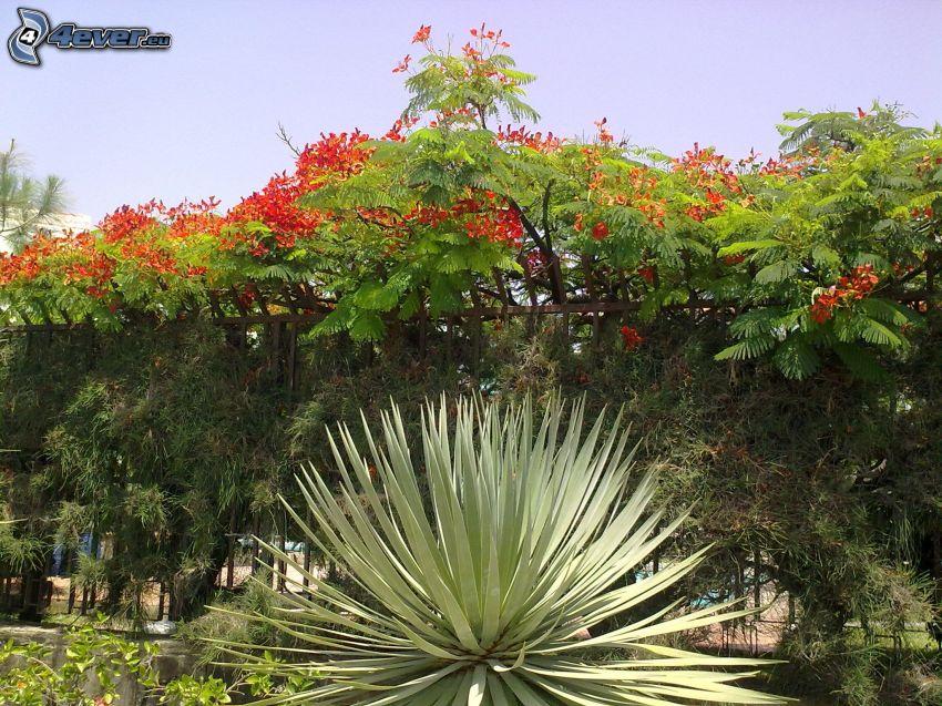 buisson, vert, fleur