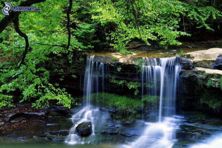 cascade, arbre, rivière