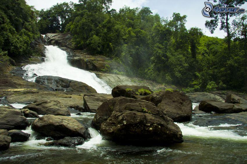cascade, rivière, pierres, forêt