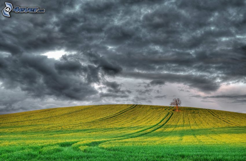 champ, arbre solitaire, nuages sombres