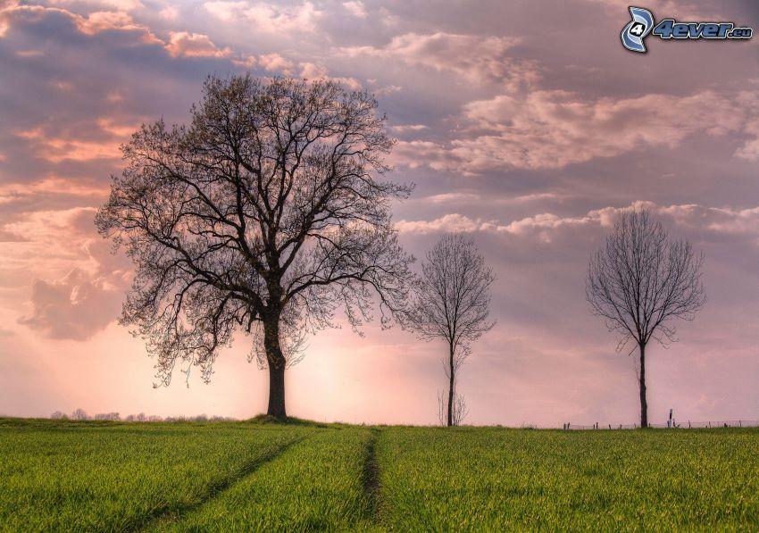 champ, arbres, coucher du soleil