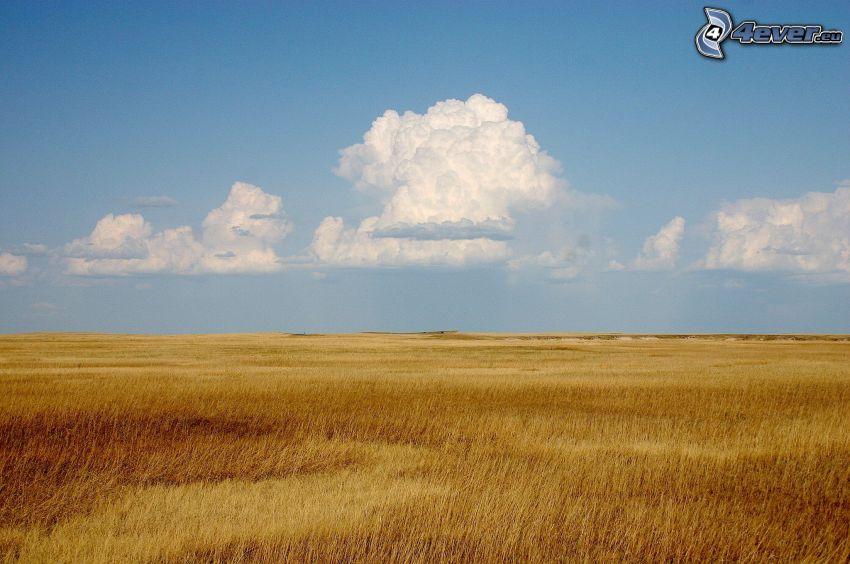 champ, nuages