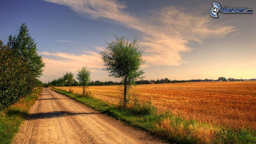 chemin de campagne, champ, arbres