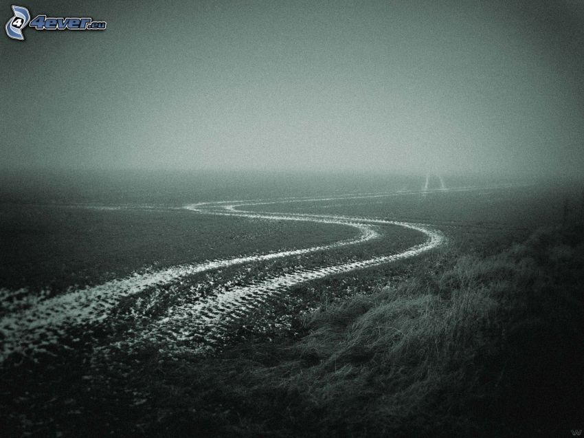 chemin de campagne, champ, brouillard