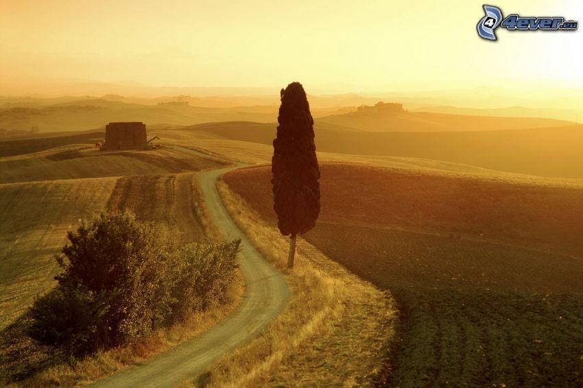 chemin de campagne, champs, arbre solitaire, coucher du soleil