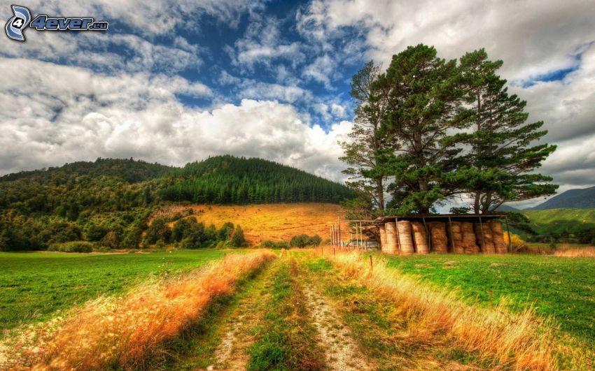 chemin de campagne, foin après la récolte, forêt, colline, nuages