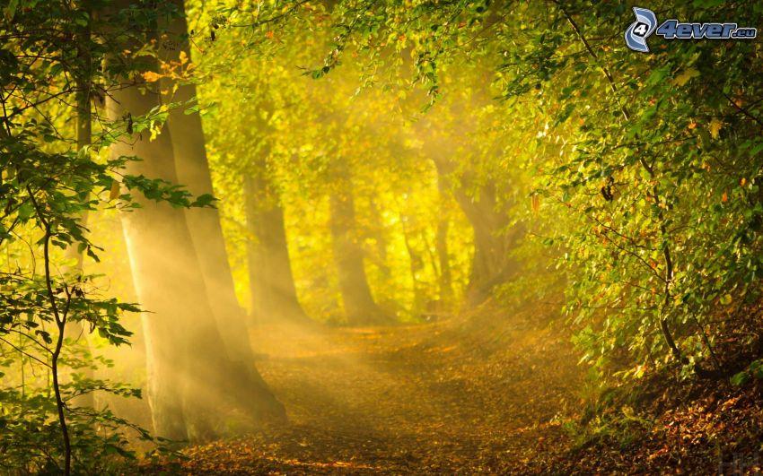 chemin forestier, rayons de soleil dans la forêt, vert