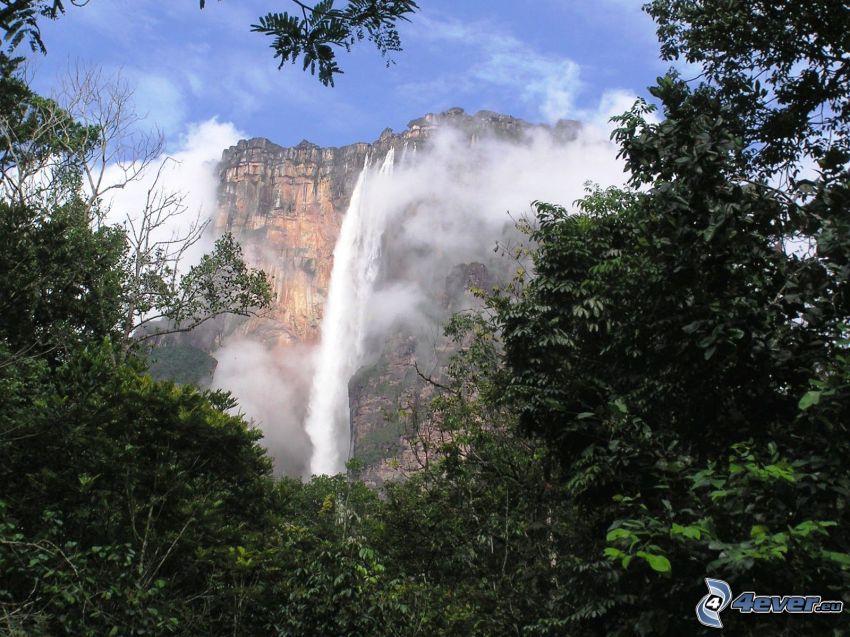 chute d'eau Angel, falaise, arbres, Venezuela