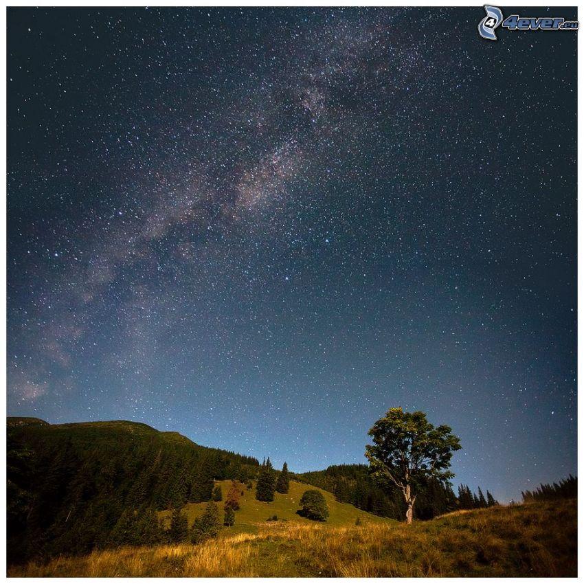ciel étoilé, arbre solitaire, colline, arbres conifères