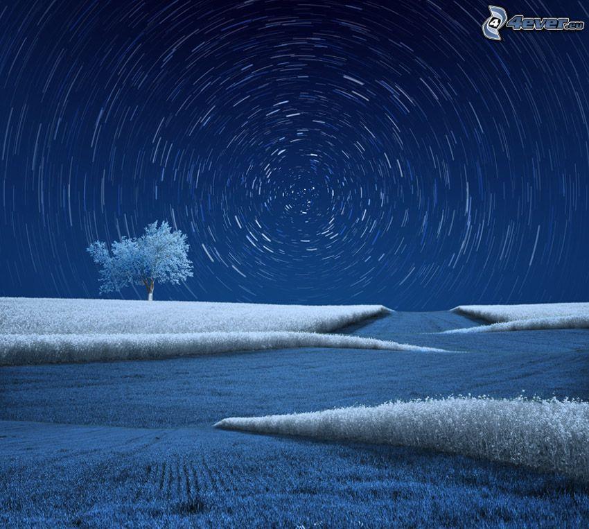 ciel étoilé, champ, herbe gelée, arbre gelé, arbre solitaire, cercles