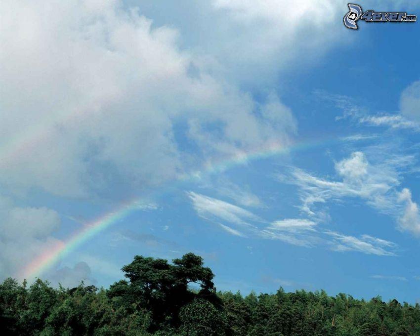 arc-en-ciel au dessus des arbres, nuages