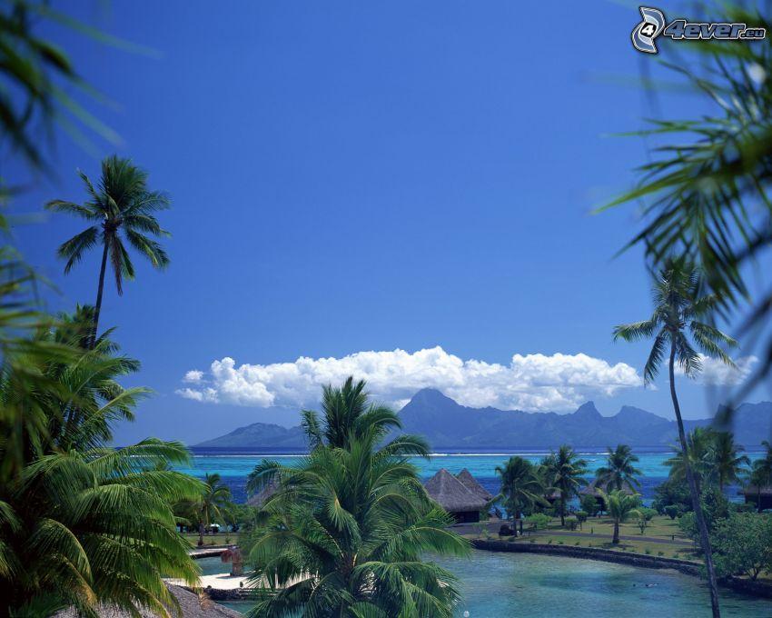 bungalows de bord de mer sur Bora Bora, vue sur la mer, palmiers, baie