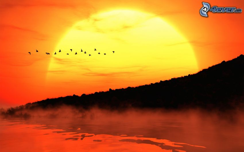 coucher du soleil, oiseaux, silhouettes, lac, vapeur