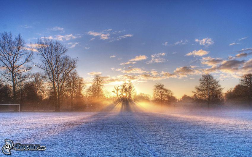 couchage de soleil derrière un arbre, prairie enneigée, rayons du soleil, nuages