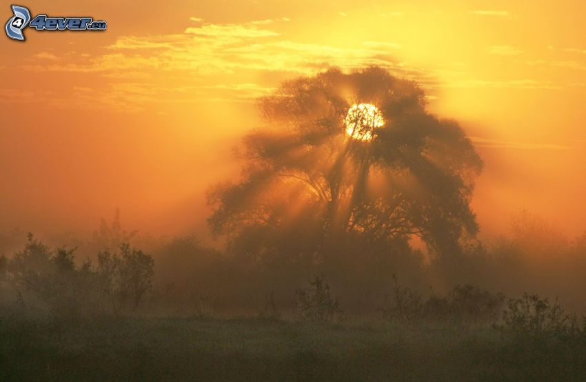 couchage de soleil derrière un arbre, silhouette de l'arbre