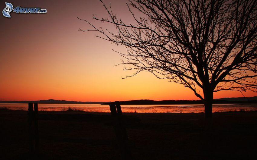 coucher du soleil orange, arbre solitaire, silhouette de l'arbre