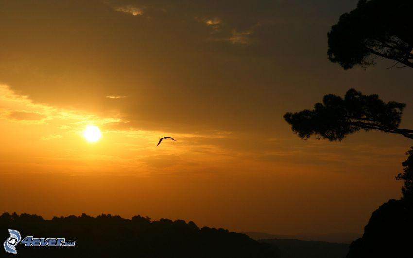 coucher du soleil orange, silhouettes d'arbres, oiseau de proie, ciel orange
