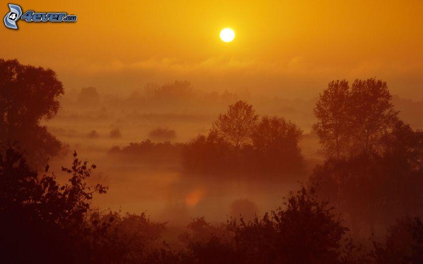 coucher du soleil sur la forêt, ciel orange, brouillard au sol