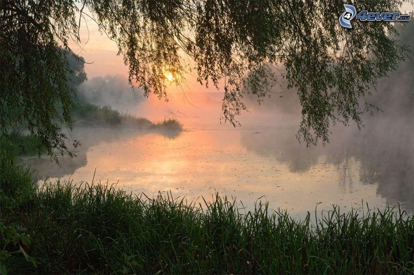 coucher du soleil sur le lac, l'herbe, arbre