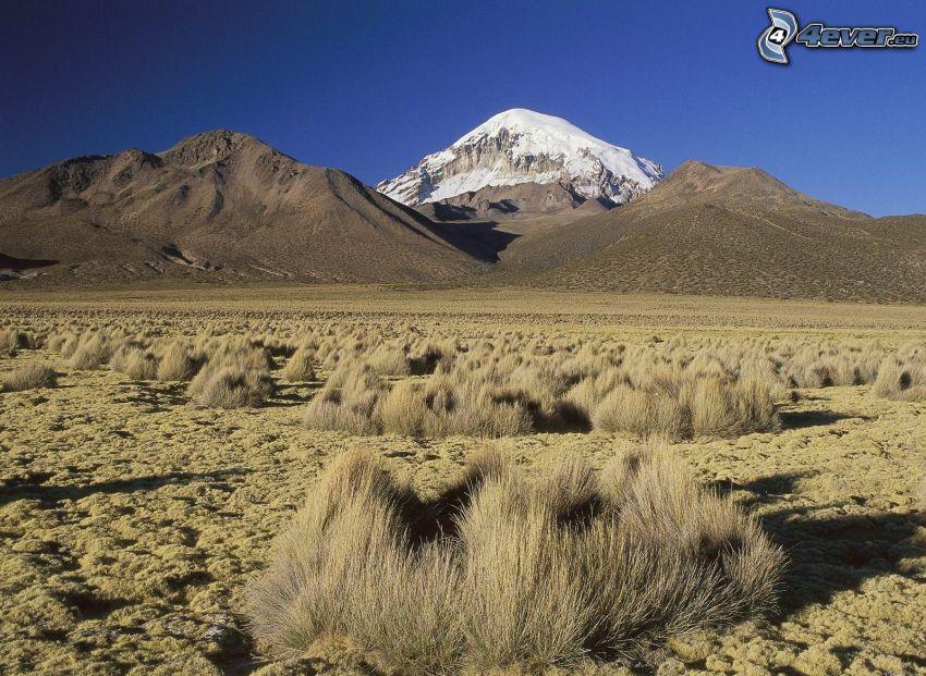 désert, collines, montagne enneigée, herbe sèche
