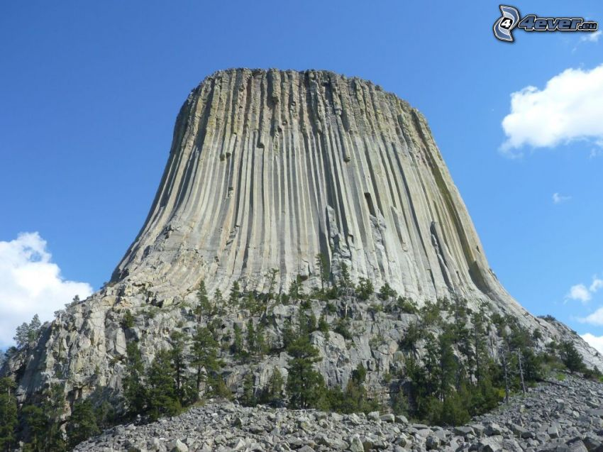 Devils Tower, rochers, arbres conifères