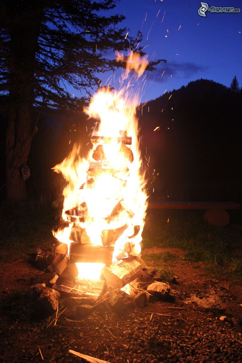 feu, silhouette de l'arbre