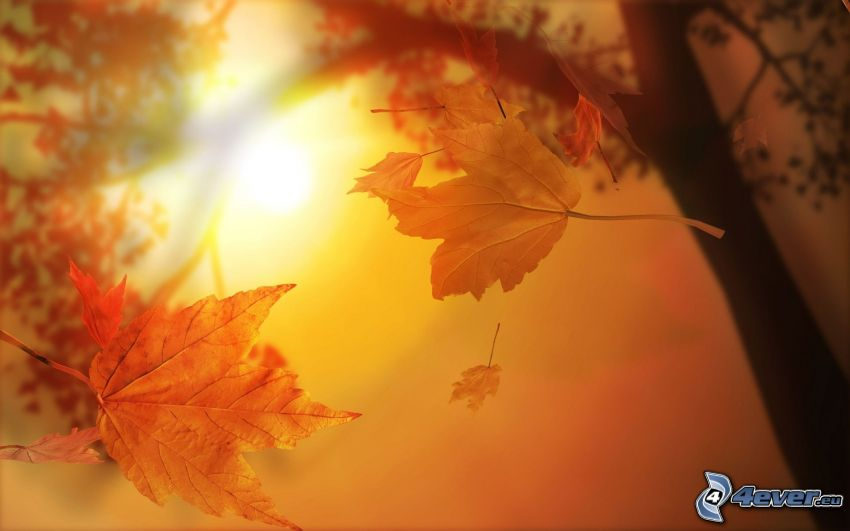 feuilles jaunes, arbre, soleil