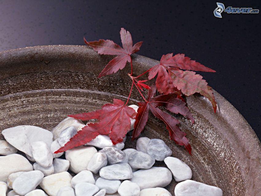 feuilles rouges, pierres, pot à fleurs