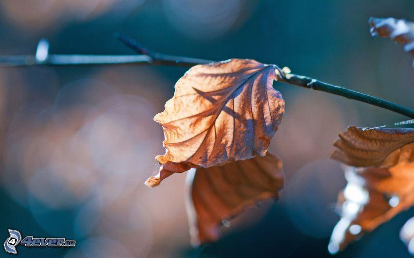 feuilles sèches, brindille