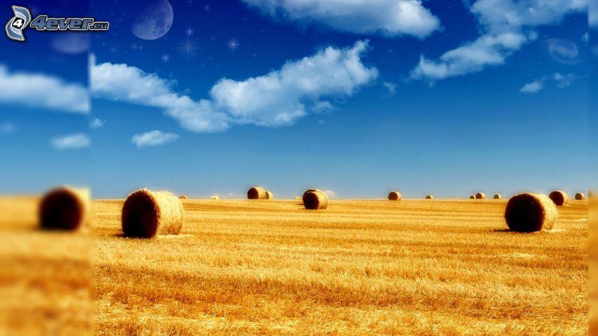foin après la récolte, nuages