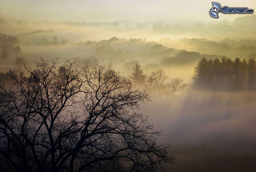 forêt, brouillard, silhouette de l'arbre