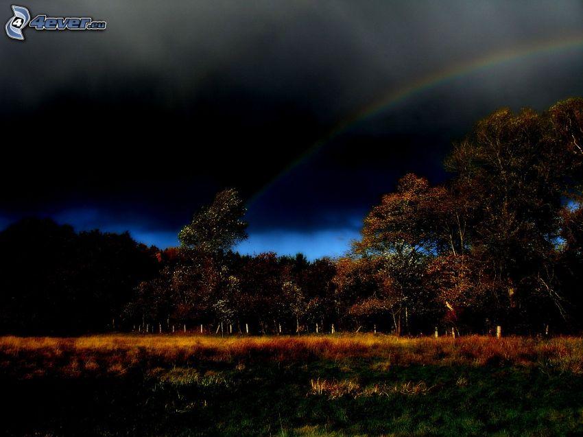 forêt, ciel sombre