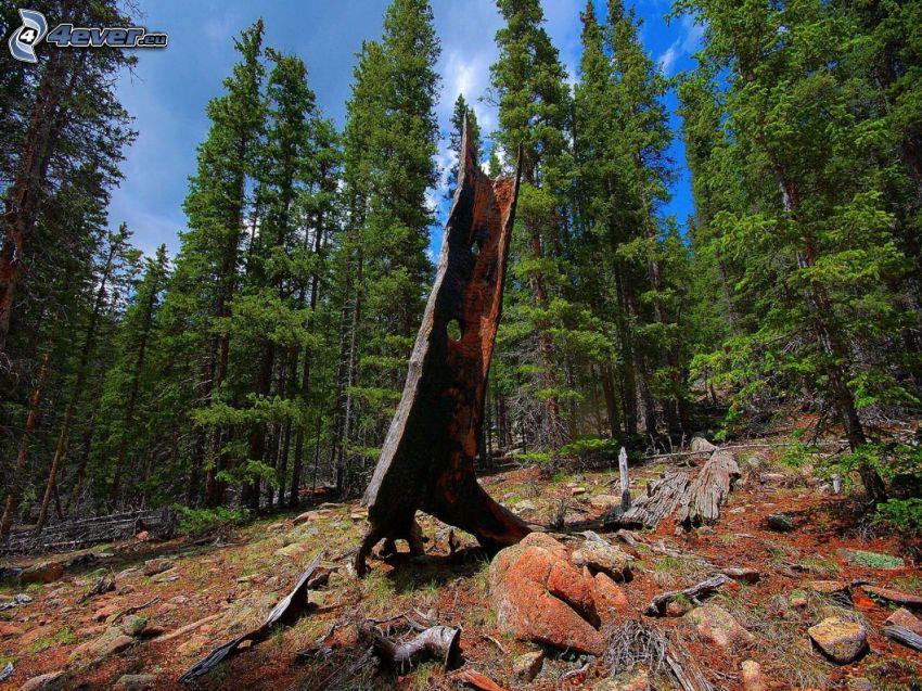 forêt, écorce d'arbre