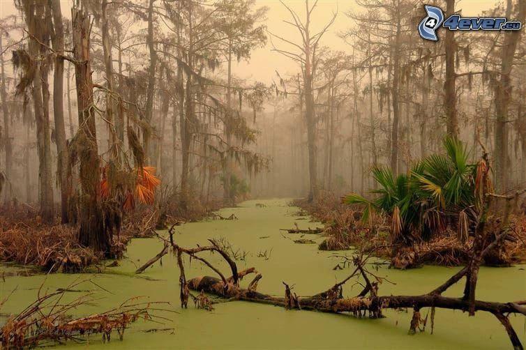 forêt, marais